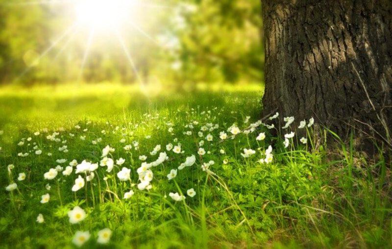 Gdzie wybrać się wiosną? Ciekawe miejsca na podróż