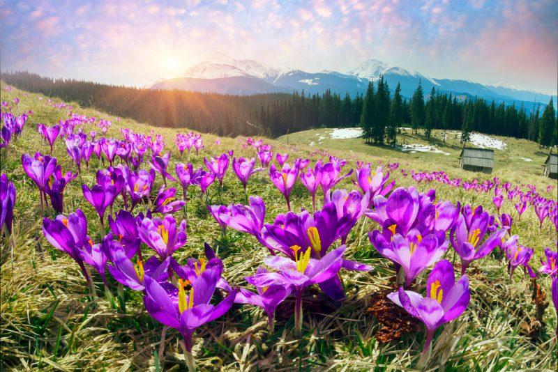 Wiosna na Podhalu – tego trzeba doświadczyć!